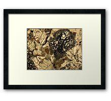 529 Framed Print