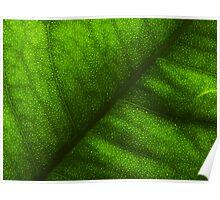 Leaves In Summer-Las Hojas En Verano Poster