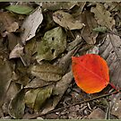 Red Leaf by Chris Cohen