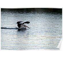 Safe Landing, Victor Harbour SA Australia Poster