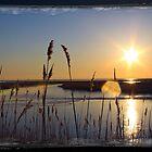 Sun Star by angelcher