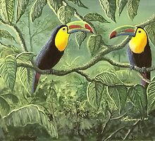 Toucans by paintme