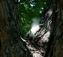 Albino Red Squirrel by cjbenck