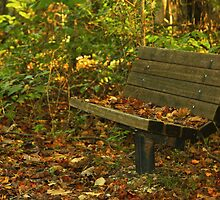 A Bench by Ginger  Barritt