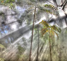 Light Streaming Rainforest Dreaming by Mark Hamilton
