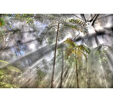 Light Streaming Rainforest Dreaming Photographic Print