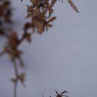 Snow herbs by BrittArnhild