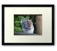 Thanks for the Nuts,  2 Framed Print