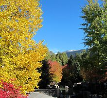 Autumn in Whistler by meredith175