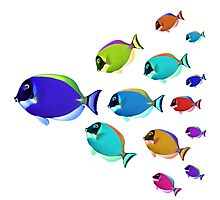 School of colorful fish  Photographic Print