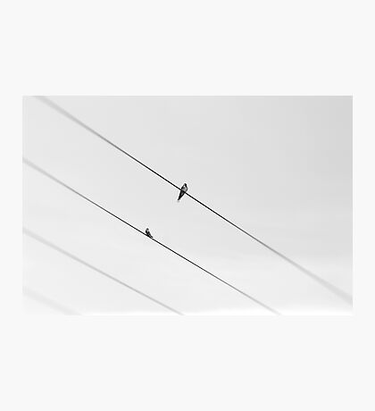 Wire Photographic Print