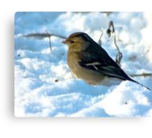 Snow Bird Canvas Print