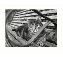 Tabby in black and white Art Print