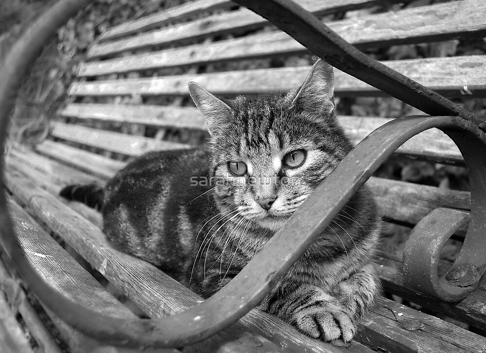 Tabby in black and white by sarahnewton