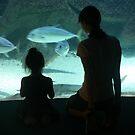 Wonder at the Aquarium by LynnEngland
