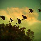 Take flight by Colleen Milburn