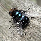 the fly II by Floralynne