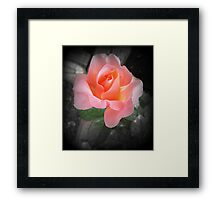 Sure is a beauty Framed Print