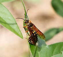Young Love amoung the Flower Wasps by Normf
