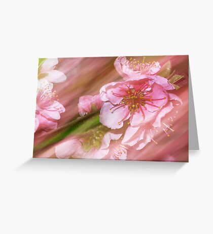 Pink. Japanese Cherry Blossom. Greeting Card