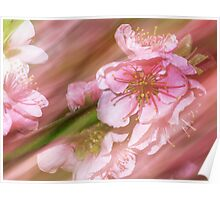 Pink. Japanese Cherry Blossom. Poster