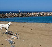 A stray dog on the beach on Crete, Greece by Yulia Manko