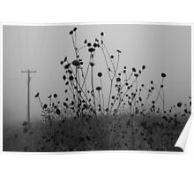 Flowers and Fog  Poster