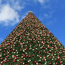 Britain's Biggest Christmas Tree by Mike Paget