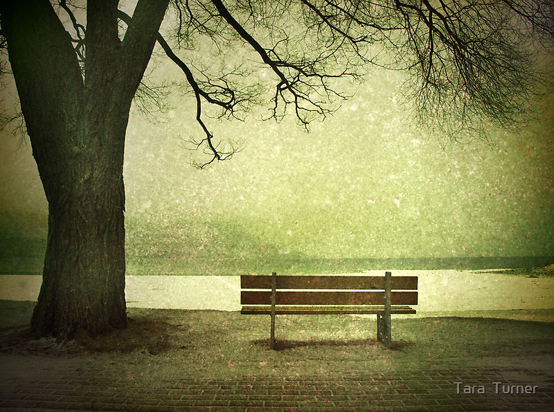 Solitude by Tara  Turner