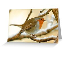 Robin on a frosty morning, County Kilkenny, Ireland Greeting Card