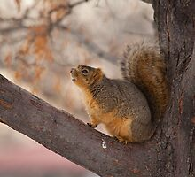 Squirrel in the Tree by Belle Farley