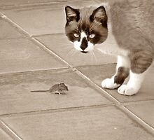 Tom and Jerry ? Nope.....Not you again!!! by Berns