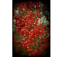 Red Berry Bokeh Photographic Print