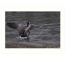 Goose 1/1/10 Art Print