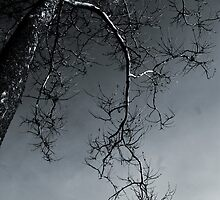 Rigid Branches by Chris Vandenberg