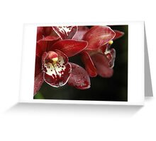 Rich Red Orchids Greeting Card
