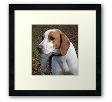 I think his name is 'Red'. Framed Print