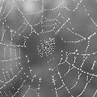 Web of Steel ! by Sharon Hagler