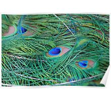 Peacock feathers close up Poster