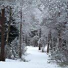 First Forest Walk  by HELUA
