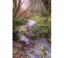 Mossy Brook Photographic Print