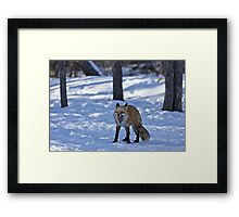 Time for a Nap - Red Fox Framed Print