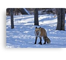 Time for a Nap - Red Fox Canvas Print
