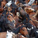 Wild Horses1 by Carlos Casamayor