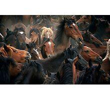Spaniard Wild Horses 3 Photographic Print