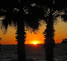Palms at Twilight by shelleybelly