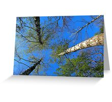 Birch trees on the background of the spring sky Greeting Card