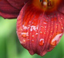 Blood Red by Susan Brown