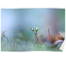 Lensbaby Moss II Poster