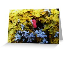 Lichen colours Greeting Card